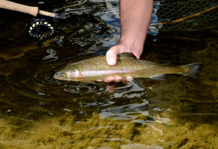 DNR announces schedule for Friday and Saturday trout stockings